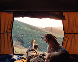camping-with-dog-4605