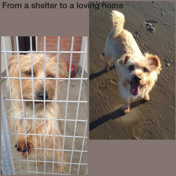 adoptera svenska hundar